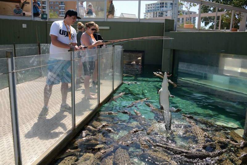Big Croc Feed Experience at Crocosaurus Cove
