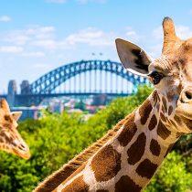 Ten of the best Sydney attractions